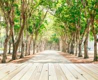 zielony światła słonecznego drzew tunel Fotografia Royalty Free
