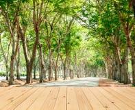 zielony światła słonecznego drzew tunel Obraz Stock