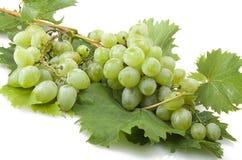 Zielony świeżości winogrono obrazy royalty free