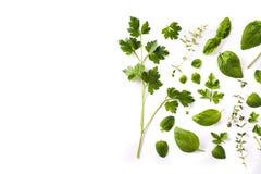 Zielony świeży aromatyczny ziele wzór odizolowywający na białym tle Odgórny widok obrazy royalty free