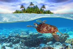 zielony żółw pod wodą zdjęcia stock