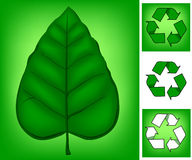 zielony, Obrazy Stock