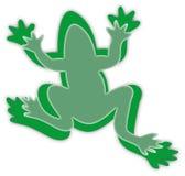 zielony żaba biel Zdjęcia Royalty Free