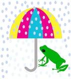 zielony żaba parasol Obraz Royalty Free