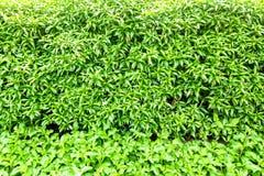Zielony abstrakcjonistyczny liścia wzoru tekstury zakończenie w górę tła Obrazy Stock