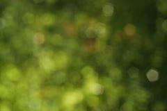 Zielony Abstrakcjonistyczny natury tło fotografia stock