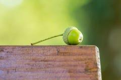 Zielony acorn na brown ławce Zdjęcie Stock