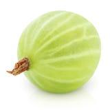 Zielony agrest na bielu Zdjęcia Royalty Free
