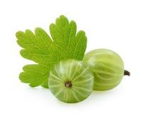 Zielony agrest z liściem Obraz Stock