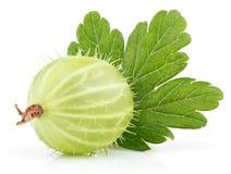 Zielony agrest z liściem na bielu Obrazy Royalty Free