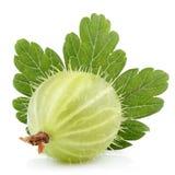 Zielony agrest z liściem na bielu Zdjęcia Royalty Free