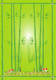 Zielony bambus Zdjęcie Stock