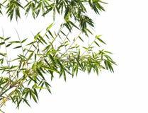 Zielony bambus w lesie Azja Zdjęcia Royalty Free