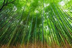 Zielony bambusa ogródu rząd w Arashiyama tradyci zwiedza w K Obrazy Stock