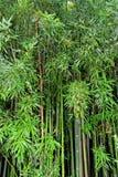 zielony bambusa zen Zdjęcie Royalty Free