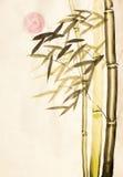 Zielony bambusowy drzewo i słońce Fotografia Royalty Free