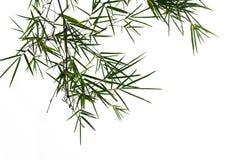 Zielony bambusowy liść, zielona tropikalna ulistnienie tekstura odizolowywająca na białym tle kartoteka z ścinek ścieżką zdjęcia stock