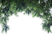 Zielony Bambusowy liścia tło - rabatowy projekt Obraz Royalty Free