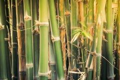 Zielony bambusowy tekstury tło Zdjęcia Stock