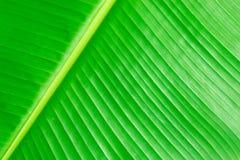 Zielony bananów liści use dla tła Zdjęcia Royalty Free