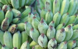 Zielony banan Obraz Stock