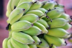 Zielony banan. Obrazy Royalty Free