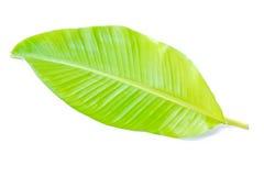 Zielony bananowy liść Zdjęcia Stock