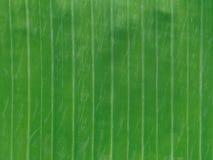 Zielony bananowy liść tekstury tło używać w Azjatyckim jedzeniu Zdjęcia Stock