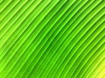 Zielony bananowy urlop Zdjęcie Royalty Free