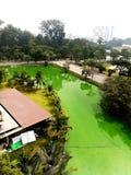 zielony basen Zdjęcia Royalty Free