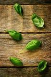 Zielony basil Zdjęcia Stock