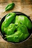 Zielony basil Zdjęcie Stock