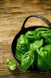 Zielony basil Fotografia Stock