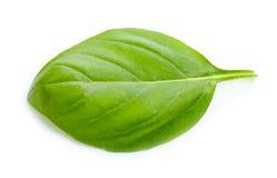 zielony Basilu liść Zdjęcia Stock