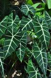 zielony biel Obrazy Stock