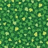 Zielony bluszcz zasadza bezszwowego deseniowego tło Obrazy Royalty Free