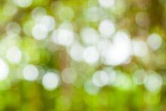 Zielony bokeh od drzewa Obrazy Stock