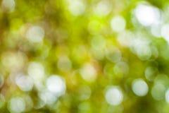 Zielony bokeh od drzewa Obrazy Royalty Free