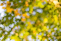 Zielony bokeh, bokeh od drzewa/zamazywaliśmy drzewa i bokeh drzewo/Zamazywał parka z bokeh tłem obraz royalty free