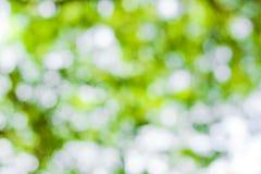 Zielony bokeh tło, zielony bokeh Obrazy Royalty Free