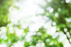 Zielony bokeh tło, zielony bokeh Obraz Stock