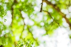 Zielony bokeh tło, zielony bokeh Obraz Royalty Free