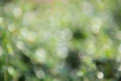 Zielony bokeh tło, zielony bokeh, zielony bokeh abstrakt Zdjęcie Royalty Free