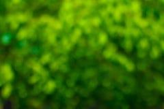 Zielony bokeh tło Zielony Bokeh Zielony bokeh abstrakt, defoc Zdjęcie Stock