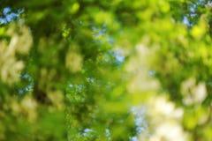 Zielony bokeh ulistnienia tło Zdjęcie Stock