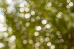 Zielony bokeh z ostrości Obrazy Stock
