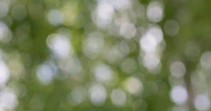 Zielony bokeh zamazujący abstrakcjonistyczny tło, ulistnienie opuszcza kiwanie w wiatrze zbiory wideo