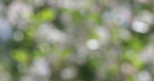 Zielony bokeh zamazujący abstrakcjonistyczny tło, ulistnienie opuszcza kiwanie w wiatrze zbiory