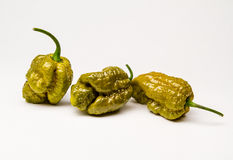 Zielony BrainStrain - Gorący pieprze Zdjęcia Stock