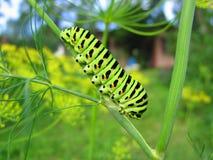 - zielony bright Zdjęcie Stock